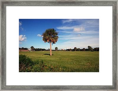 The Palmetto Tree Framed Print by Susanne Van Hulst