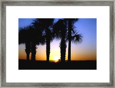 The Palms At Sunset Framed Print by Debra Forand