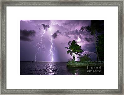 The Palms Framed Print