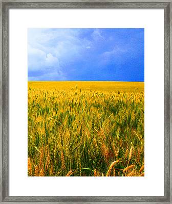 The Palouse Wheat Fields Framed Print