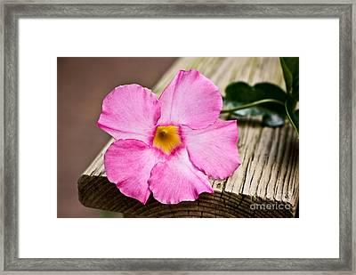 The Pandorea Vine Framed Print by Ryan Kelly