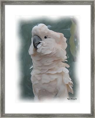 The Parakeet Framed Print by Wayne Bonney