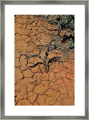The Parched Earth Framed Print