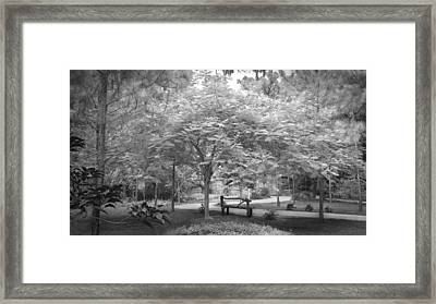 The Park Bench Framed Print by Louis Ferreira