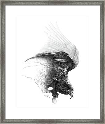 The Parrot Framed Print