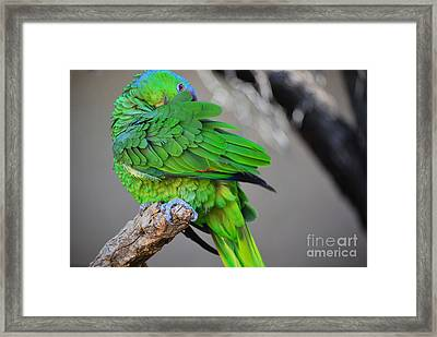 The Parrot Framed Print by Donna Greene