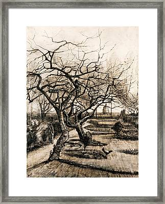 The Parsonage Garden At Nuenen In Winter Framed Print by Vincent van Gogh