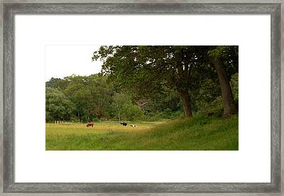 The Pasture Framed Print by Lisa Patti Konkol