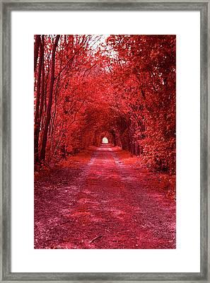 The Path 2 Framed Print