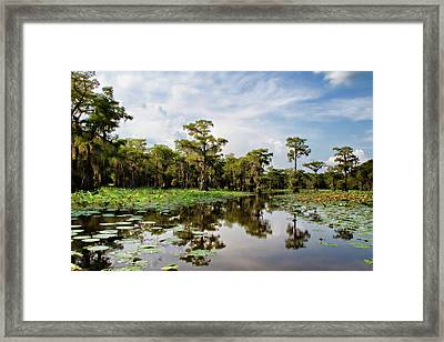 The Path Among Framed Print