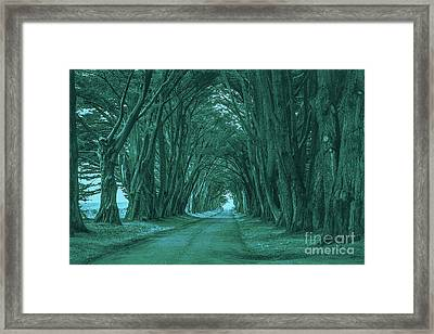 The Path Before Me Framed Print