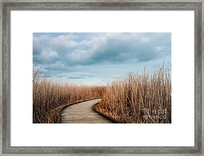 The Path Framed Print by Janal Koenig