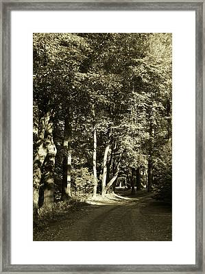 Framed Print featuring the photograph The Path Less Traveled by John Schneider