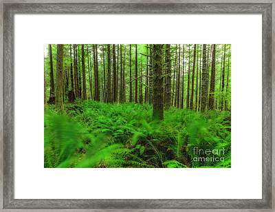 The Path Of Winds Framed Print by Masako Metz