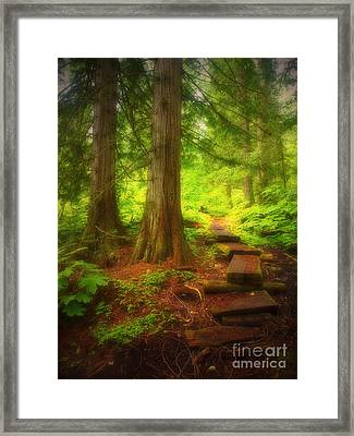 The Path Through The Forest Framed Print