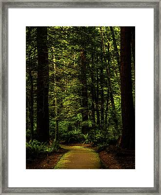 Framed Print featuring the photograph The Path by TL Mair