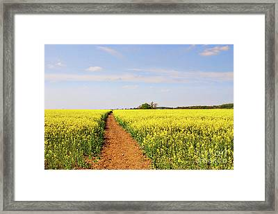 The Path To Bosworth Field Framed Print by John Edwards