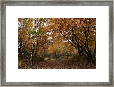 The Path Way Framed Print