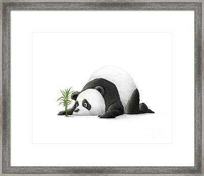 The Patient Panda Framed Print by Michael Ciccotello