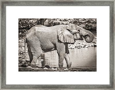 The Pause That Refreshes - Black And White Elephant Photograph Framed Print by Duane Miller