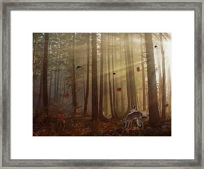 The Peace Of An Autumn Sunset Framed Print