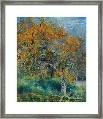 The Pear Tree Framed Print by Pierre Auguste Renoir