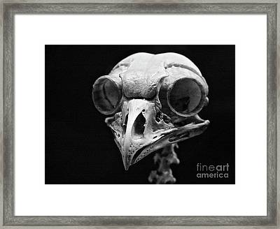 The Pecker Framed Print
