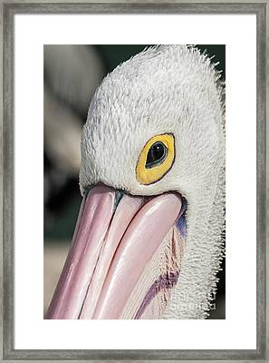 The Pelican Look Framed Print