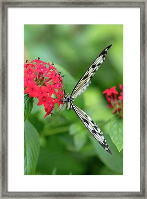 The Perfect Butterfly Land Framed Print