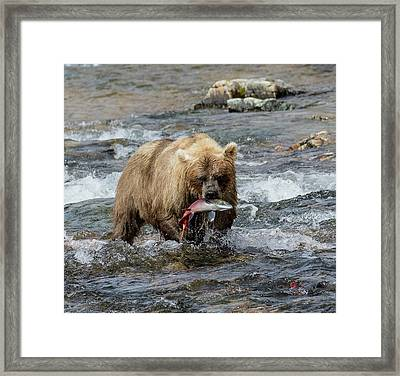 Framed Print featuring the photograph The Perfect Catch by Cheryl Strahl