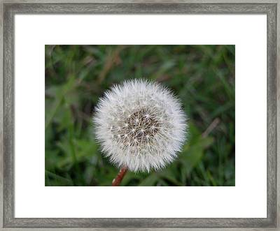 Framed Print featuring the photograph The Perfect Dandelion by DeeLon Merritt