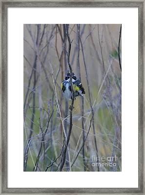 The Perfect Hiding Spot Framed Print