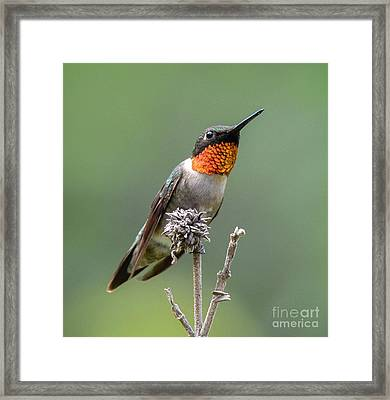 The Perfect Lookout Framed Print