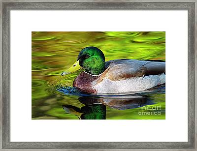 The Perfect Model Framed Print by Sharon Talson