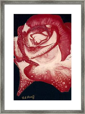 The Perfect Rose Framed Print