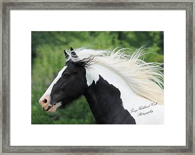 The Perfect Stallion  Framed Print by Terry Kirkland Cook