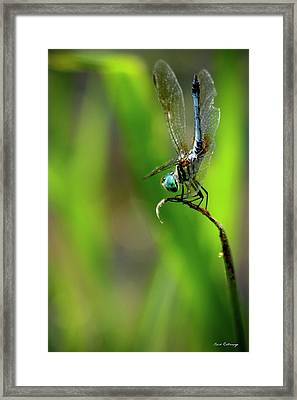 Framed Print featuring the photograph The Performer Dragonfly Art by Reid Callaway