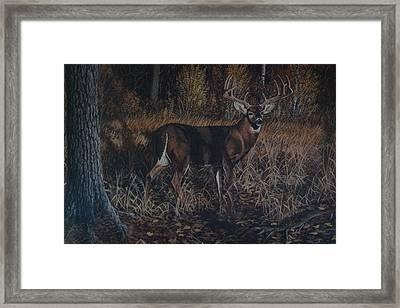 The Phantom Buck Framed Print