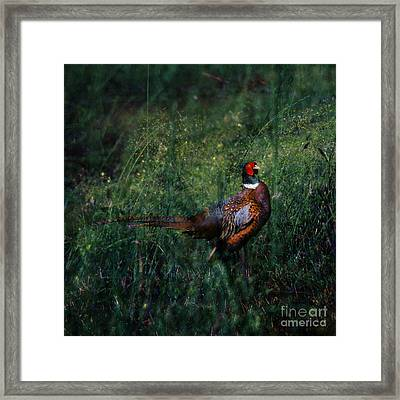 The Pheasant In The Autumn Colors Framed Print by Angel  Tarantella