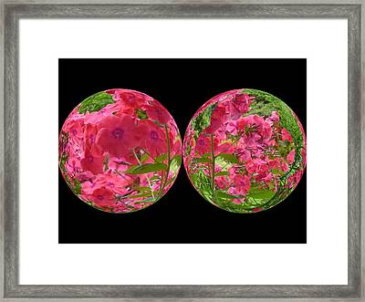 The Phlox Twins Framed Print by Nancy Pauling