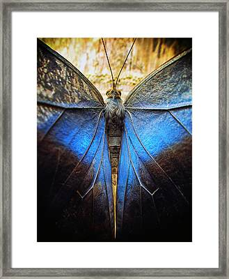 The Phoenix Framed Print