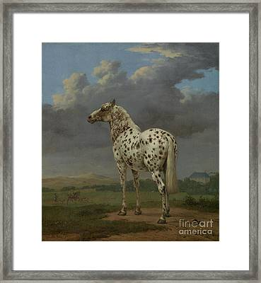 The Piebald Horse By Paulus Potter  Framed Print by Esoterica Art Agency