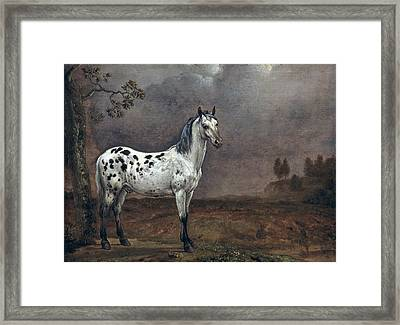 The Piebald Horse Framed Print by Paulus Potter