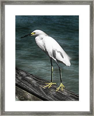 The Pier Master Framed Print