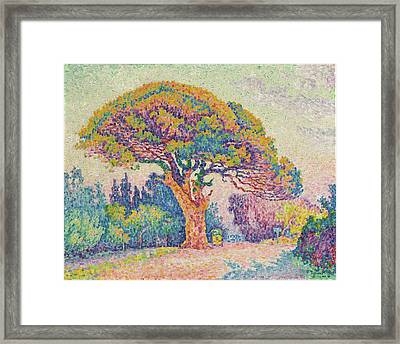 The Pine Tree At Saint Tropez Framed Print by MotionAge Designs