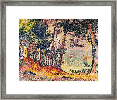 The Pine Wood, Provence Framed Print by Henri-Edmond Cross