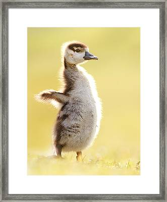 The Pinguin Simulator Framed Print by Roeselien Raimond