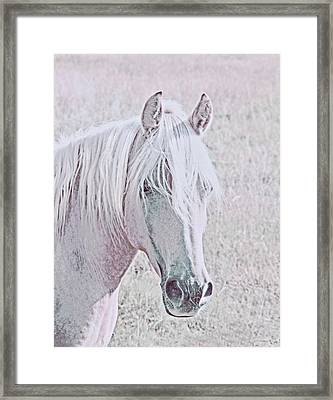 Framed Print featuring the photograph The Pink Horse by Jennie Marie Schell