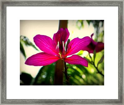 The Pink Lady Framed Print by Karen Wiles