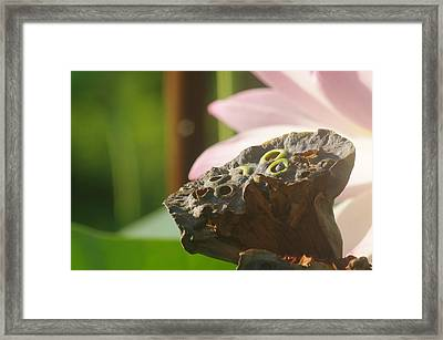 The Pod Framed Print
